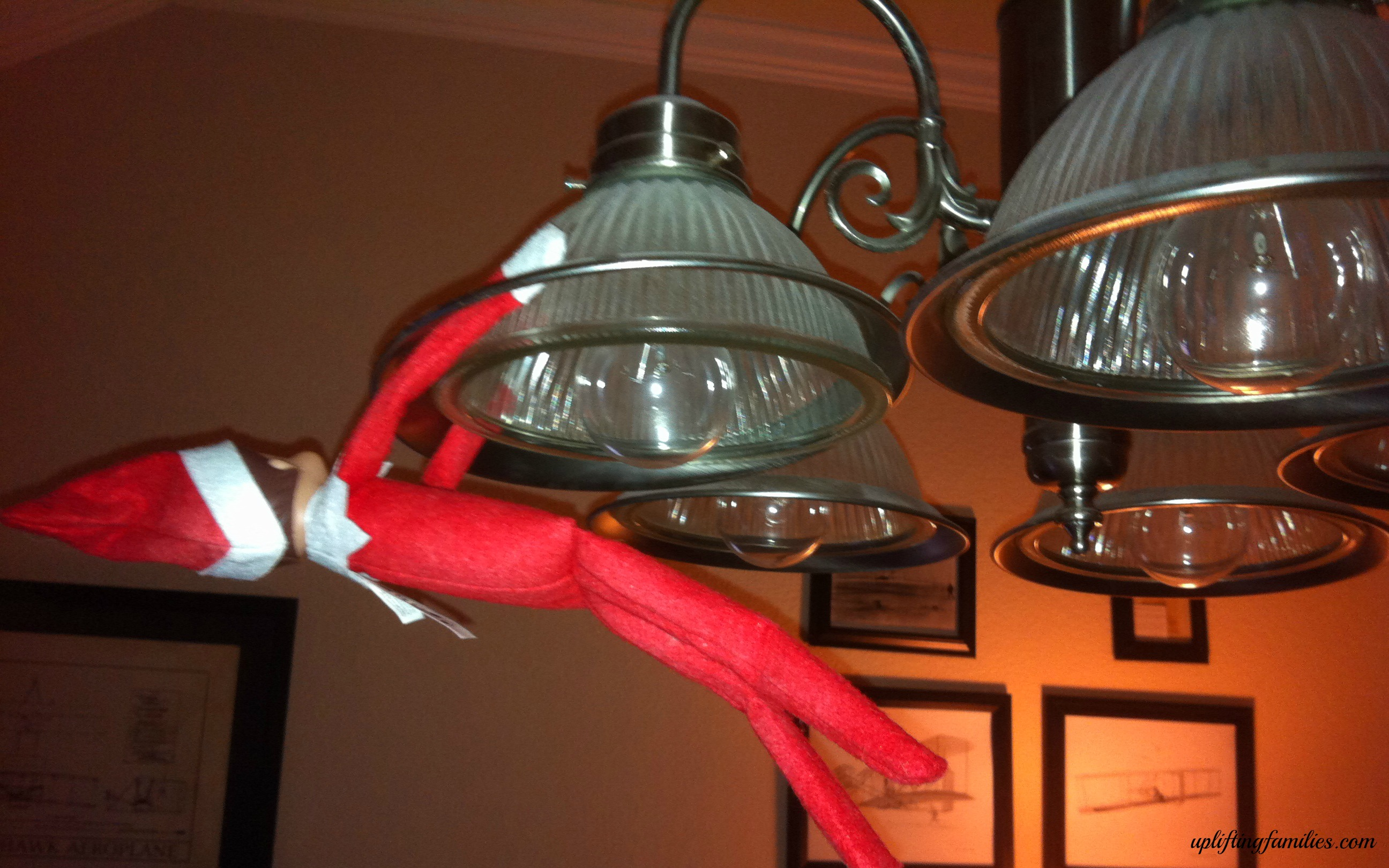 Rascal Was Hanging on the Chandelier this Morning