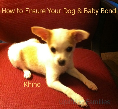 How to Ensure Your Dog and Baby Bond