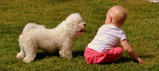 The Basics for Harmonious Relationship Between a Dog and a Child