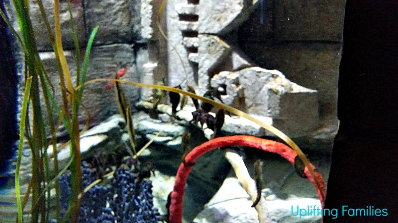 Seahorses at Sea Life Aquarium Grapevine Texas