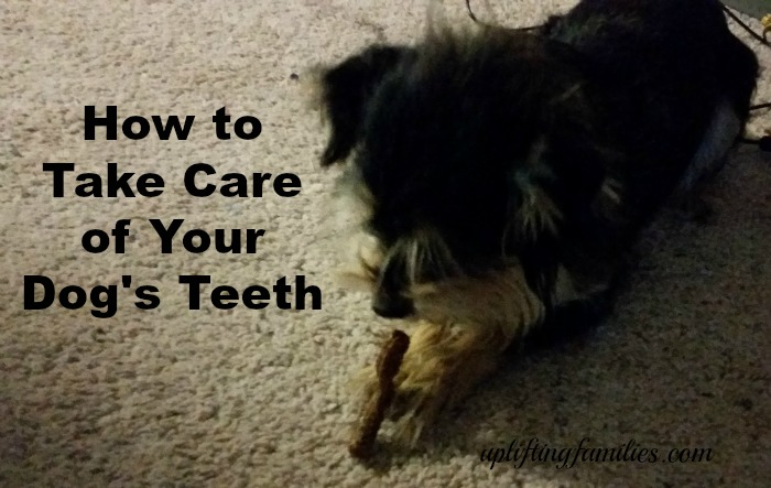 How to Take Care of Your Dog's Teeth